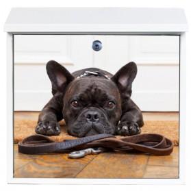 Franse bulldog op stalen brievenbus - ook eigen foto mogelijk