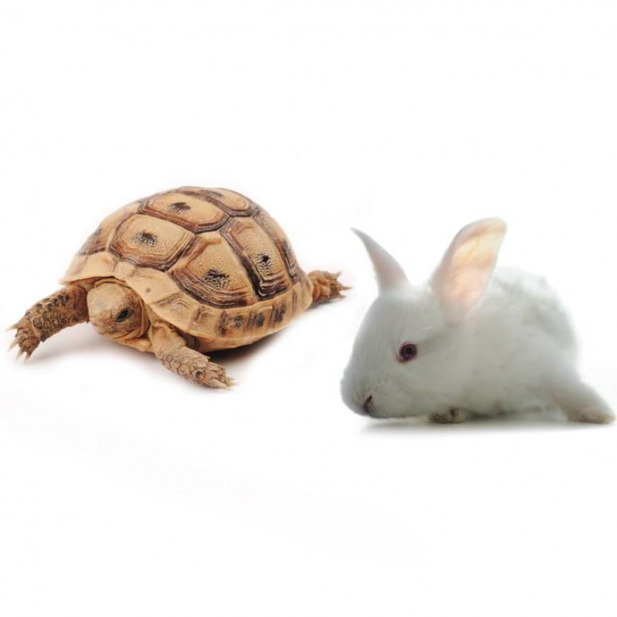 Overige dieren